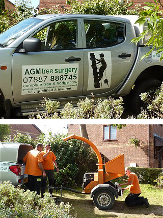 Contact AGM Tree Surgery Mold