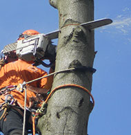 canopy and felling services