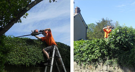 Stump Removal and Hedge Maintenance